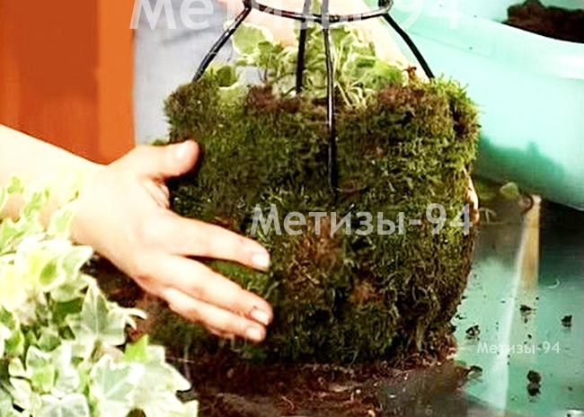 садовая скульптура топиари каркас своими руками