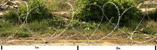 Єгоза Козачка 3,5 витків на метр