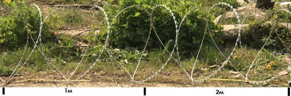 Єгоза Козачка 4,5 витка на погонний метр