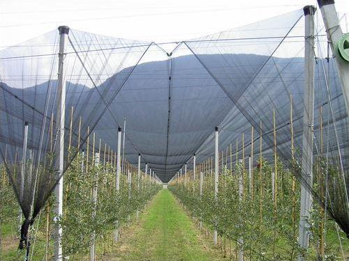 захист дерев і кущів у садівництві, захист виноградника від граду, комах, дощу