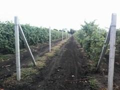 виноградный столб
