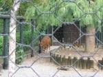 Сетка крученая в зоопарке