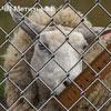 Плетеная сетка Рабица 25х25