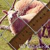 плетеная сетка Рабица 50х1,6