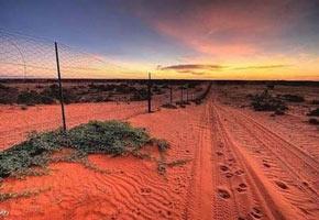 Собачий забор в Австралии, фото