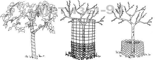 защита деревьев и саженцев от зайцев