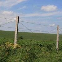 Забор из колючей проволоки ограждает поле с овощами.